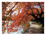 Fall Foliage Around Tida Basin Washington Dc No-5