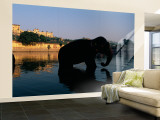 Silhouette of Two Elephants in a River  Amber Fort  Jaipur  Rajasthan  India