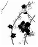 White N Black Cherry Blossom