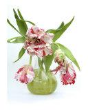 Vase Of Parrott Tulips