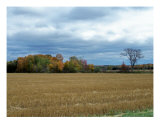 Maine Farm Country 16