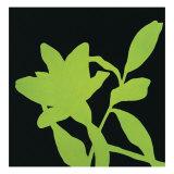 Fiore Verde
