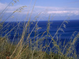 View of the Sea Through Grasses Atop a Hill