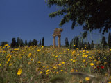 Ancient Roman Columned Ruins Amid Wildflowers in Sicily  Italy