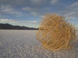 Tumbleweed on the Bonneville Salt Flats  Utah