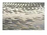 Ripple-Patterned Tidal Flat at Low Tide  Brewster  Cape Cod  Massachusetts