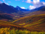 Valley Blooms with Autumn Colors  Tombstone Territorial Park  Yukon Territory  Canada