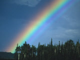 Rainbow over Forest  British Columbia  Canada