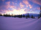Flag Trees Amid Snow Patterns  Churchill  Manitoba  Canada