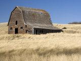 Dilapidated Barn Near Cabri  Saskatchewan  Canada