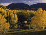 Farm Nestled Among Aspen Trees in Fall Colors and Mountains  Telluride  Colorado