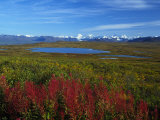 Fall Colors in an Alaskan Field  Alaska