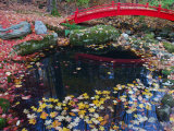 Fallen Leaves from Japanese Maples Floating in a Pond  New York