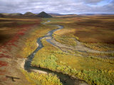 Fall Color on the Central North Slope of Alaska  North Slope  Alaska