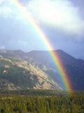 Rainbow over Forest  Alaska