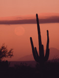 Desert Scene with Full Moon and Saguaro Cactus at Sunset  Saguaro National Monument  Arizona