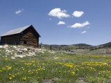 Log Cabin on the High Country Ranch on the Continental Divide  Tres Piedras  New Mexico