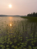 Sun and Reflection in a Lake with Grasses  Alaska
