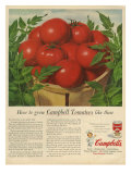 Campbell's  Magazine Advertisement  USA  1950