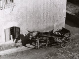 Carriage Pulled by a Mule