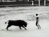 Toreador is Facing a Bull at the Center of a Bullfight