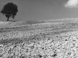 Ploughed Ground and Tree