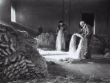Inside a Factory  a Few Workers Arrange the Raw Hemp Fibers in Bunches