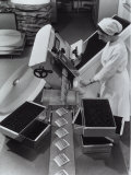 Worker Operating a Machine That Packages Medicine in Vials  Recordati Pharmaceutical Factory