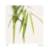 Bamboo Study 5