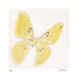 Butterfly Study 11