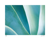 Agave II
