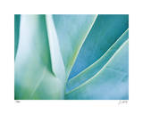 Agave I