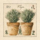 Herbes de Provence  Thym