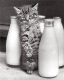 Cat with Bottles of Milk