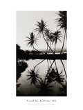 Coconut Palms  Pearl Harbor  Hawaii  1927