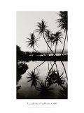 Coconut Palms  Pearl Harbor  Hawaii  1927