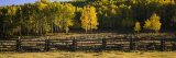Wooden Fence and Aspen Trees in a Field  Telluride  San Miguel County  Colorado  USA