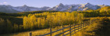 Trees in a Field Near a Wooden Fence  Dallas Divide  San Juan Mountains  Colorado  USA