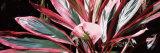 Close-up of a Flower  Hilo Tropical Gardens  Hilo  Hawaii  USA