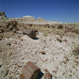 Petrified Forest  Arizona  United States of America  North America