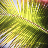 Green Palm Leaves  Jambiani  Zanzibar  Tanzania  East Africa
