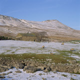 Yorkshire Dales in Winter  North Yorkshire  England  United Kingdom  Europe