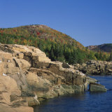 Gulls on Rocks Along the Coastline  in the Acadia National Park  Maine  New England  USA