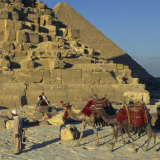 Bedouin and Two Camels Passing by the Pyramids  Giza  UNESCO World Heritage Site  Cairo  Egypt