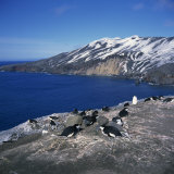 Chinstrap Penguins on the Rocks on the Coast of Deception Island  Antarctic Peninsula  Antarctica