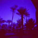 Palm Trees in Silhouette  Photographed Through Blue Glass Window  Ouarzazate  Morocco