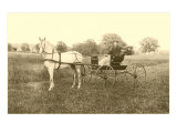 Man in Horse-Drawn Carriage in Grass