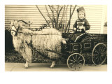 Girl with Ringlets in Goat Cart