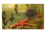 Underwater Scene with Starfish and Seahorses
