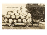 Giant Apples in Mule Cart